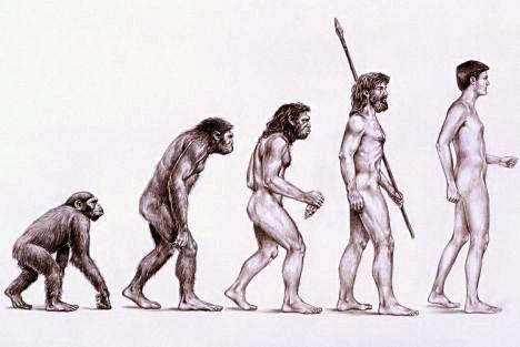 evolution-de-l-homme
